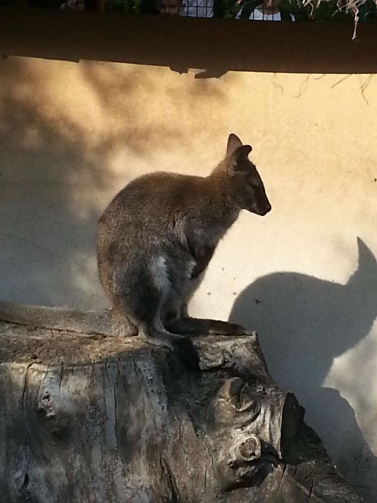 Le Parc Phoenix c'est un peu une découverte de l'Australie !