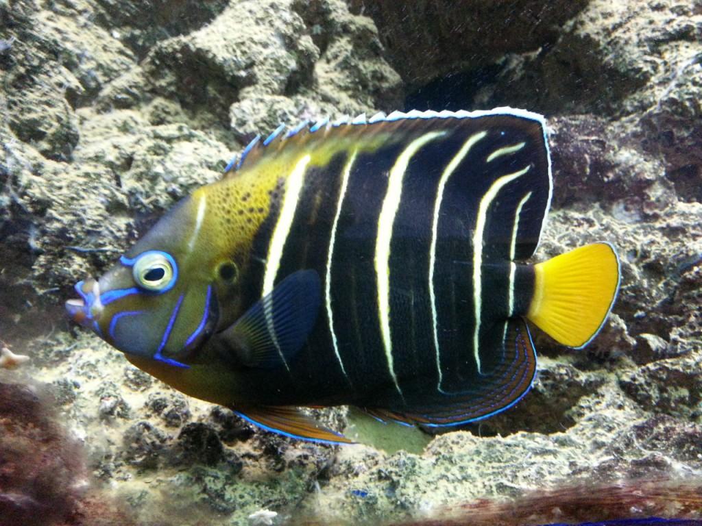 L'aquarium contient de nombreuses espèces de poissons